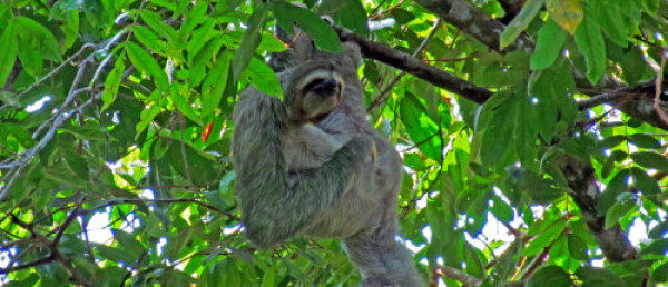 https://costaricawaterfalltours.com/wp-content/uploads/2015/10/34ad838cb66dfb3f46a61661f19a5cbb26902bc0-600x258-600x258.jpeg