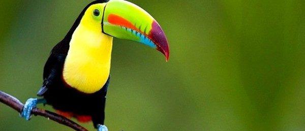 https://costaricawaterfalltours.com/wp-content/uploads/2015/10/CararaNationalParkTours-600x258-600x258.jpg