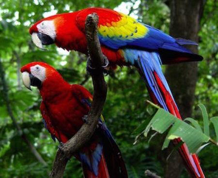 https://costaricawaterfalltours.com/wp-content/uploads/2015/10/Costa-Rica-Carara-Lapas-1-21-450x368.jpg