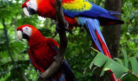 https://costaricawaterfalltours.com/wp-content/uploads/2015/10/Costa-Rica-Carara-Lapas-1-21-559x327.jpg