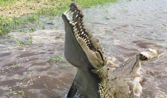 https://costaricawaterfalltours.com/wp-content/uploads/2015/10/Crocodile-man-jaco-costa-rica-tours2-559x327.jpg