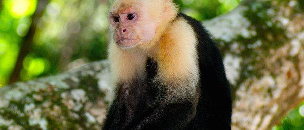 https://costaricawaterfalltours.com/wp-content/uploads/2015/10/OBC_CARA-NATIONAL-PARK1-600x258-600x258.jpg