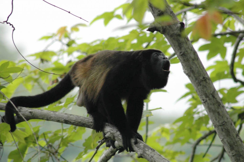 Monkey Mangrove Tour | Costa Rica Waterfall Tours