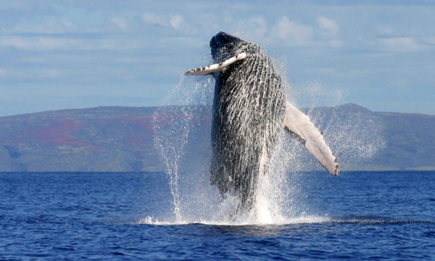 Whales Amp Dolphin Watching Tour Costa Rica Waterfall Tours