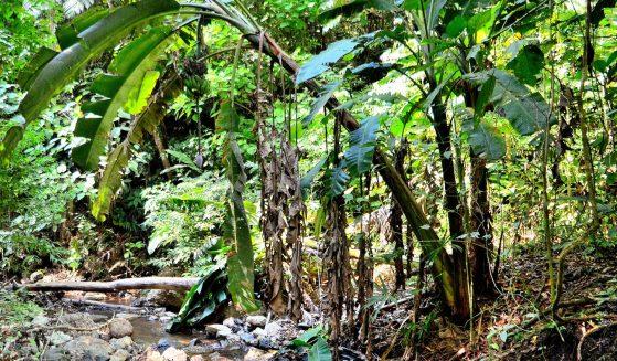 https://costaricawaterfalltours.com/wp-content/uploads/2019/03/DSC_7835-1-559x327.jpg